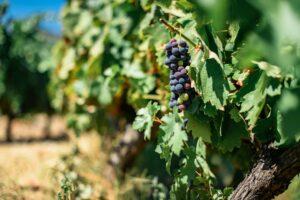 Hai già prenotato la visita in cantina? gli appuntamenti del Movimento Turismo del Vino
